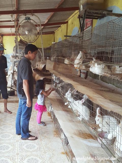 BFC Mini Farm : Kelinci