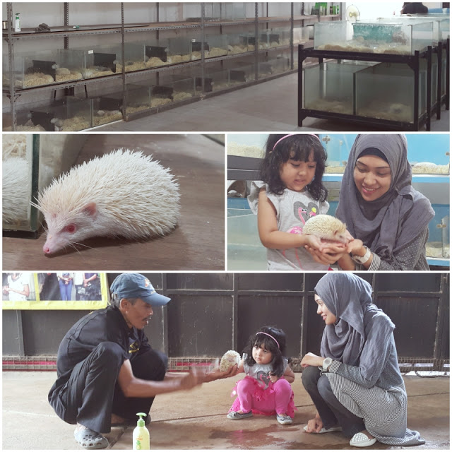 BFC Mini Farm : Landak Mini
