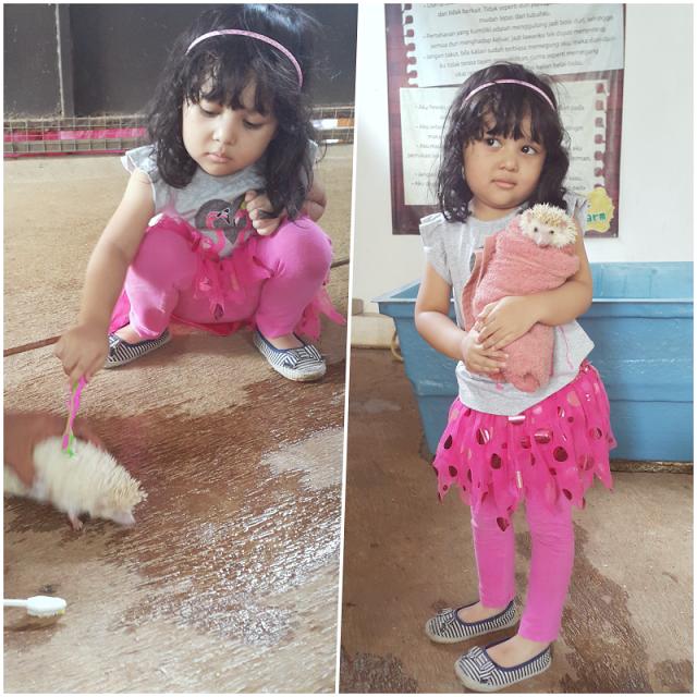 BFC Mini Farm : Sikat Landak Mini