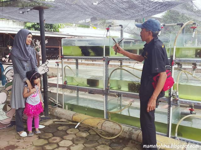 BFC Mini Farm : Lobster Air Tawar