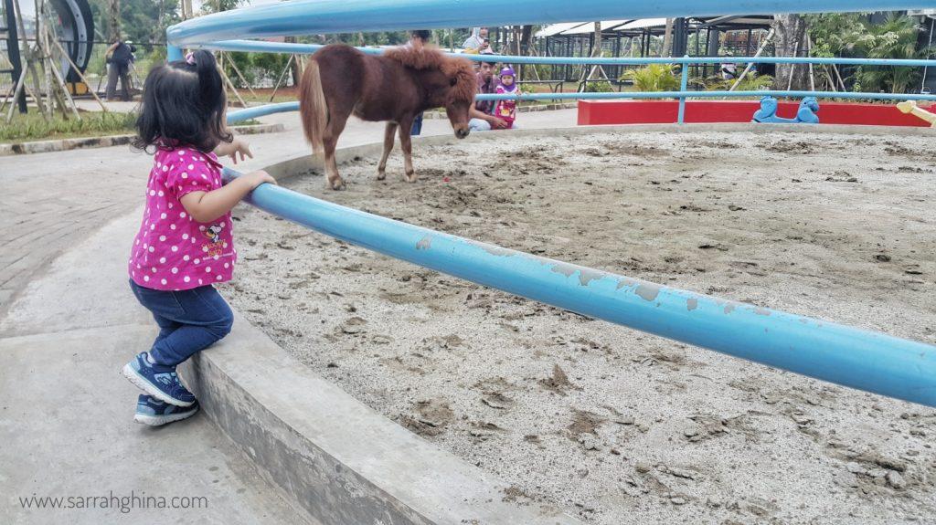 kuda pony di branchsto